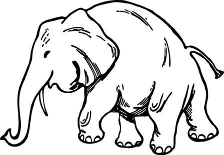 Dibujos de elefantes » ELEFANTEPEDIA