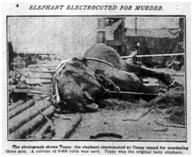 foto de elefante electrocutado