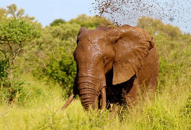 Alimentación De Los Elefantes Elefantepedia