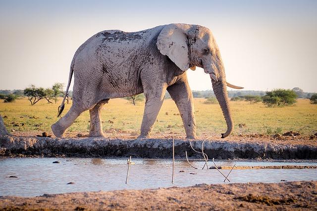 Hábitat De Los Elefantes Elefantepedia