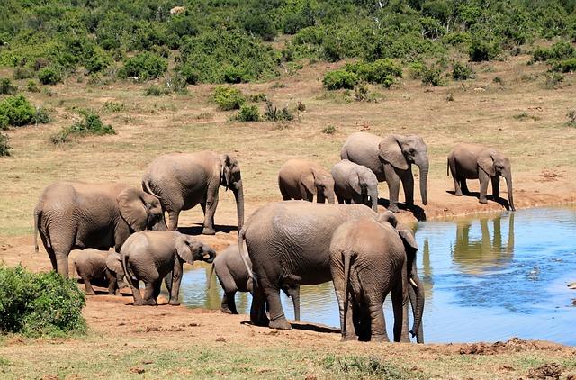 ELEFANTEPEDIA » Elefantes. Enciclopedia Ilustrada