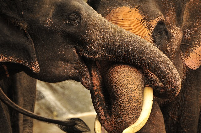 La trompa del elefante » ELEFANTEPEDIA