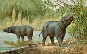 antepasado elefante