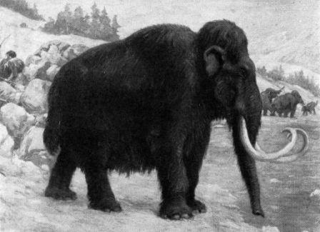 Elefantes Prehistoricos Elefantepedia Disfruta del juego smilodon y mamut furiosos, es gratis, es uno de nuestros juegos de dinosáurios que hemos seleccionado. elefantepedia